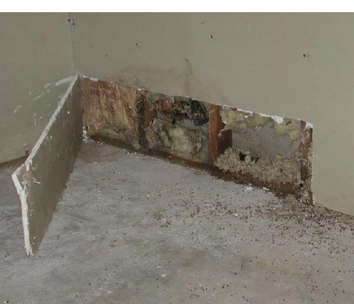 Mold Remediation Mold in Storage